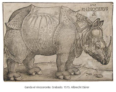 230-Rinoceronte-3